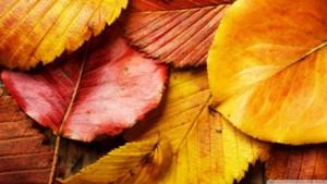beautiful-autumn-leaves-2_00434909